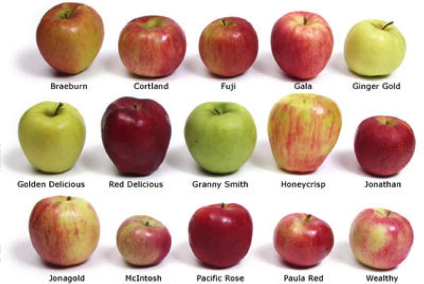 Яблоки для диеты